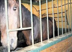 caballo estabulado