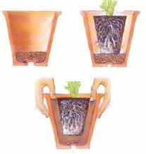 tarsplante de plantas