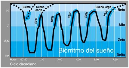 bioritmo del sueño